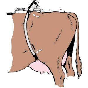 Антибрык для коров (схематичное изображение)