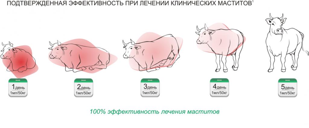 Цефтонит для коров